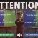 compare_the_meerkat